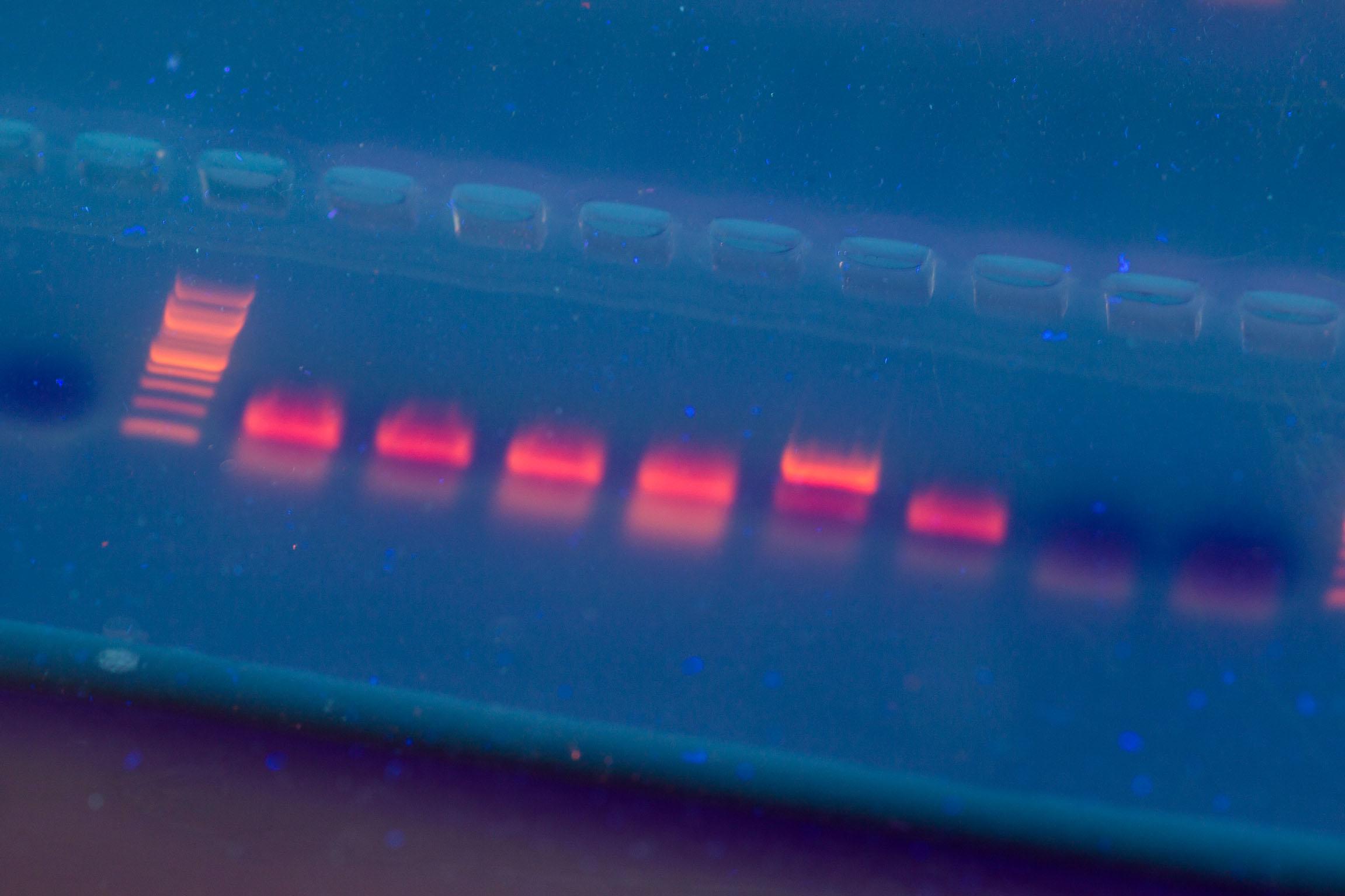 Huidige PCR-methode